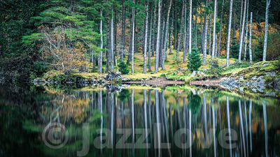 Reflection of trees in lake.