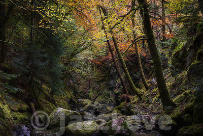 Rocky gorge in autumn forest.