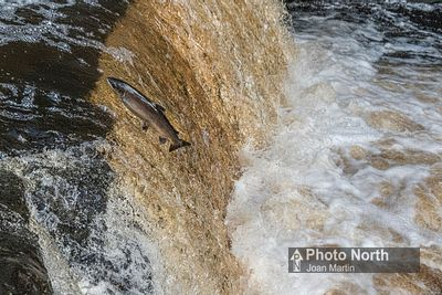 STAINFORTH 07A - Leaping salmon, Stainforth Force