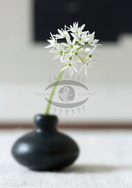 Wild Garlic Flowers by Bauer