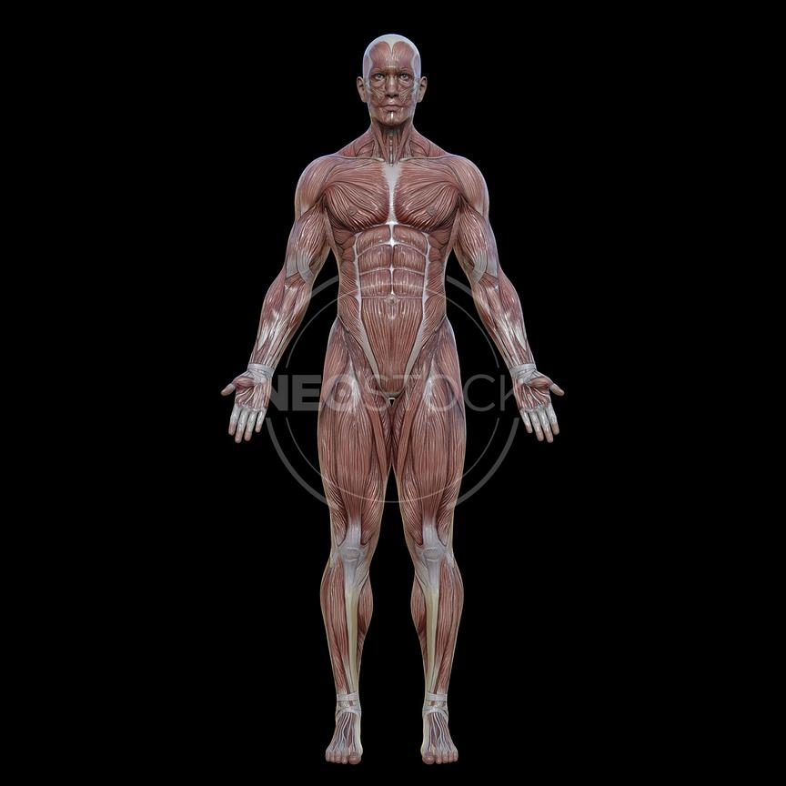 cg-body-pack-male-muscle-map-neostock-20