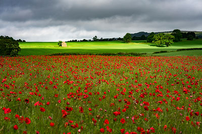 Poppy field and old barn | Peak District Photography