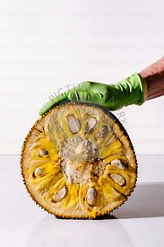 Jackfruit cleaning with a person in a rubber glove
