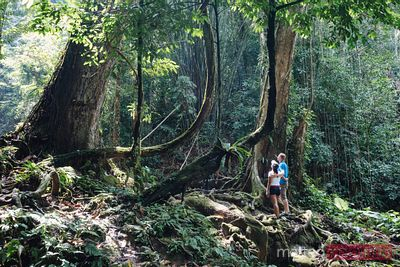 Adult couple in the tropical forest, Phang Nga bay, Thailand