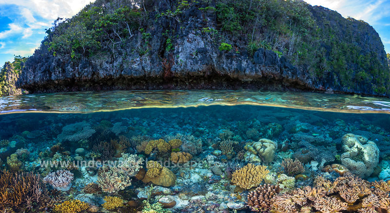 Panorama: From coral to rock