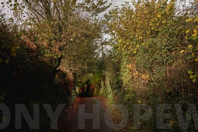 Holloways_and_Tramways-1000492