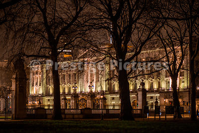 Buckingham Palace at Night through surrounding Trees in Green Park