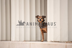 smaller terrier mix peering around a white pillar