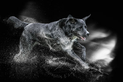 Art-Digital-Alain-Thimmesch-Chien-950