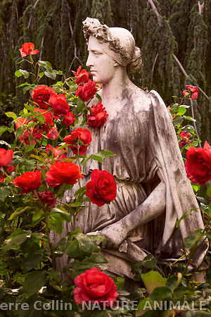 Statue, entourée de roses, dans l'enceinte de l'hôpital Sainte-Anne. .Statue, surrounded by roses, in the enclosure of the Sa...