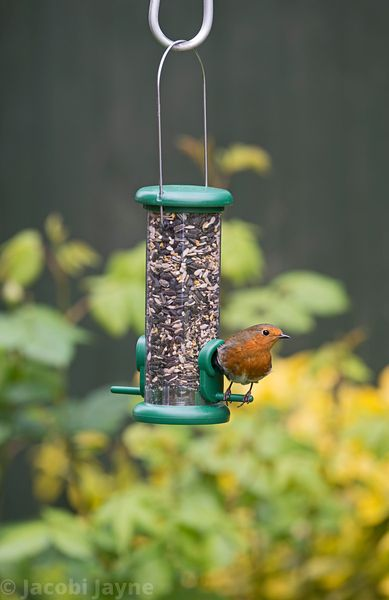 The One seed feeder
