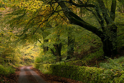 Mid October on a quiet country lane in the Peak District