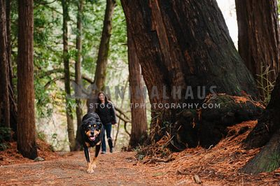 A dog walking down a forest trail in front of her mom