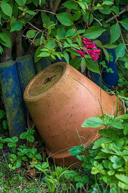 Terracotta pot in a garden in summer, Hauts de France, France ∞ Pot en terre cuite dans un jardin, France, Hauts de France, été