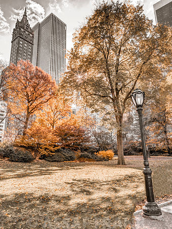 Central park in autumn, Manhattan, New York