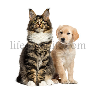 Cat and dog puppy sitting, isolated on white