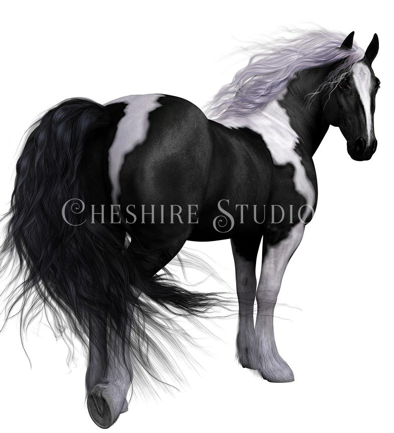 Black and White Vanner Horse