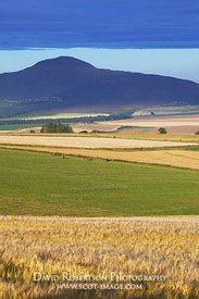 Image - Lomond Hills and barley fields, Scotland