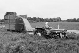 #120067, One of the Sisters harvesting the grass for silage on the farm at Ladywell Convent, Godalming, the Motherhouse of an...