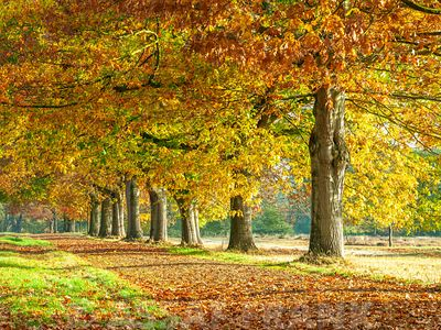 Row of trees with autumn colours