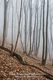 Image - Woodland scene in foggy weather