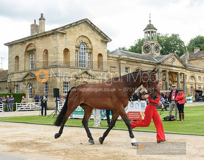 Camilla Kruger and BIARRITZ II at the trot up, Equitrek Bramham Horse Trials 2019