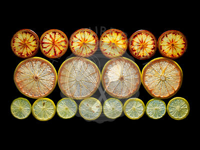 Backlit portrait of various citrus fruit slices. Pink grapefruit, blood oranges, and lime.