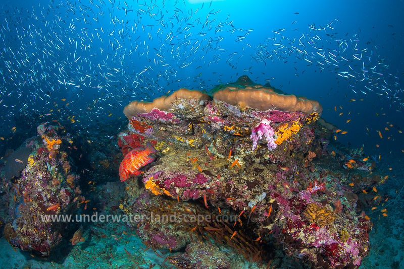 Reefs of the Andaman Sea