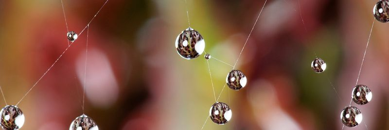 Image - Water droplets on spider's web.