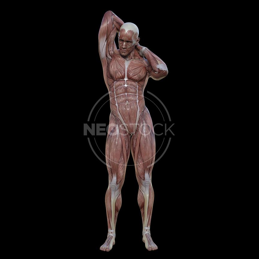 cg-body-pack-male-muscle-map-neostock-32