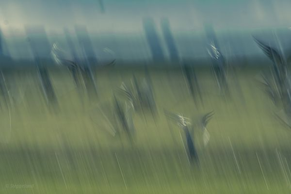 Geese taking off - abstract blue-green