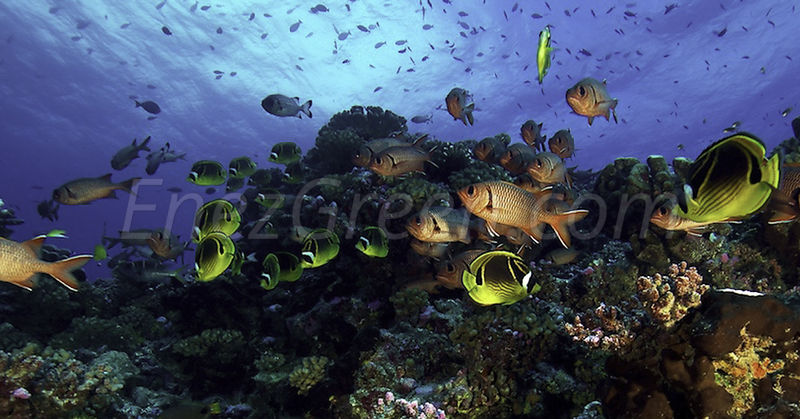 Tank diving along Rangiroa's atoll coral reef