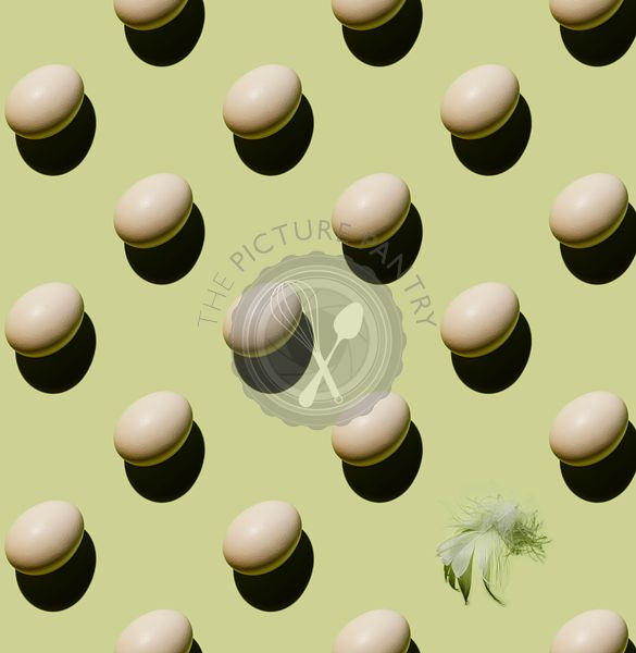 Chicken eggs and feather on green background Pattern