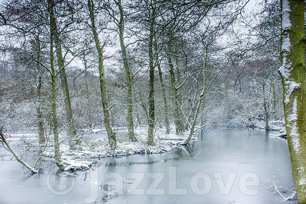 Frozen lake in british woodland on cold winter day.