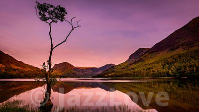 The lone tree on shore of Buttermere lake in Lake District at sunset.