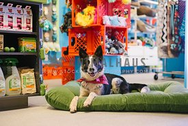 A dog laying on a dog bed inside a pet retail store