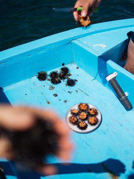 Eating sea urchins in Salento