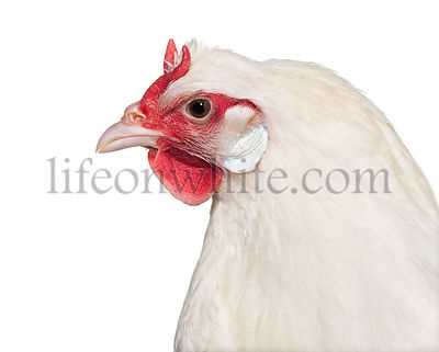 La Fleche chicken against white background