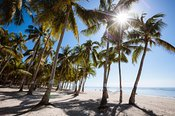 Sandy beach with palm trees, Panglao, Philippines