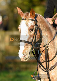 At the meet. The Quorn Hunt at Fox Covert Farm 10/1