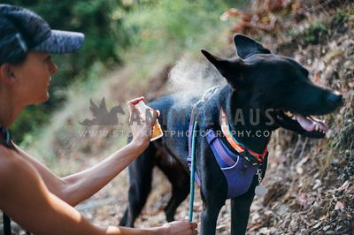 Black dog getting sprayed with insect repellent by her mom.