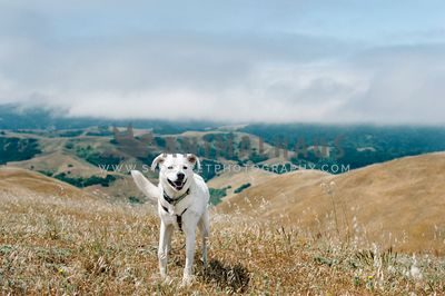 A happy large white dog standing in front of a view