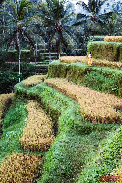 Beautiful woman in the rice fields of Ubud, Bali, Indonesia