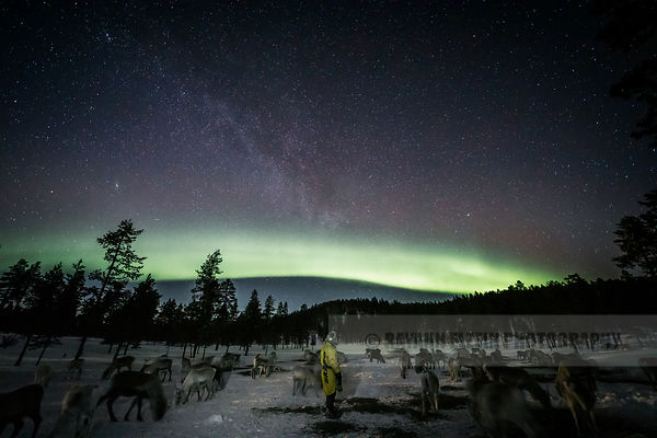 Reindeer herder Petri Mattus standing with his reinder under the northern lights and Milky Way in Finnish Lapland