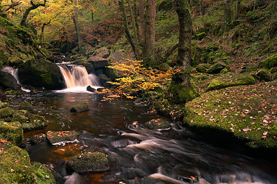 Burbage Brook in autumn