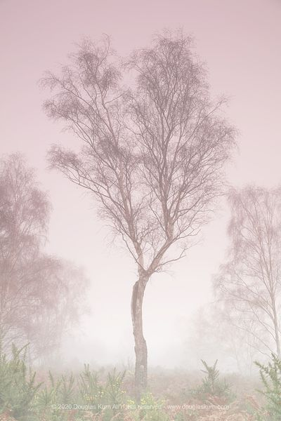 Limited edition Giclée fine art print of Trees in the fog on Chobham Common, Chobham, Surrey. Photo by Douglas Kurn