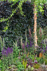 The Lower Barn Farm Outdoor Living Garden at the RHS Hampton Court Palace Garden Festival 2019. Designer: Robert Grimstead.  ...