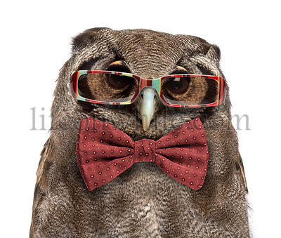 Close-up of a Verreaux\'s eagle-owl - Bubo lacteus (3 years old) wearing glasses and a bow tie in front of a white background