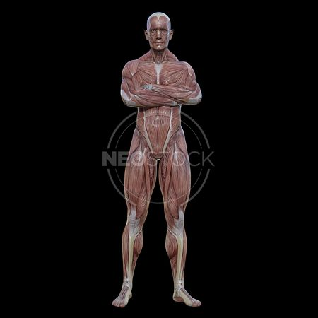 cg-body-pack-male-muscle-map-neostock-3