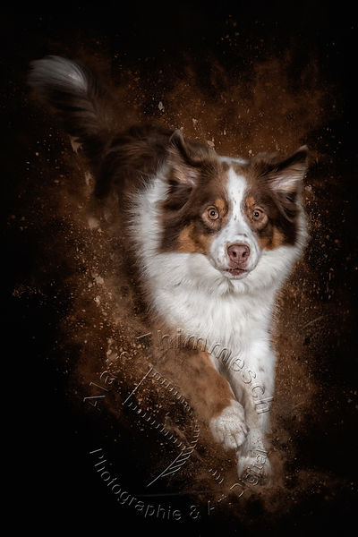 2020-Art-Digital-Alain-Thimmesch-Chien-1